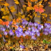 Последние цвета осени :: Анастасия Ласская