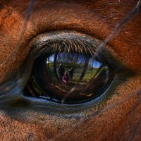 моя семья глазами коня :: konstantin tatonkin