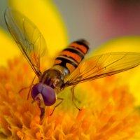 Муха и нектар :: Виктор Филиппов