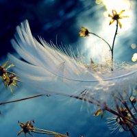 Ангел пролетал... :: ольга хадыкина