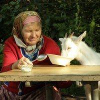 Обід з Кнопкою :: Сергій Гордієнко