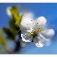 Весна :: Вера Ульянова