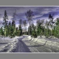 Дорога через лес :: Александр Силинский