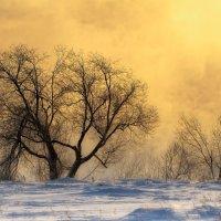 Зимнее утро :: Aleks