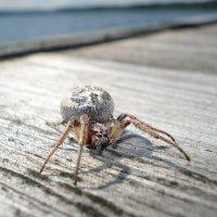 паук :: Андрей Герасимов