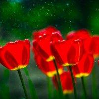 тюльпаны :: Руслан Алимов
