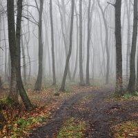 Осень туманная... :: Мария Панькина