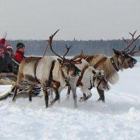 За спиной летит снежок! :: Ирина Нафаня