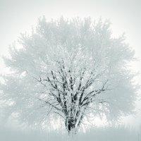 В рассветно-туманном инее... :: Игорь Белоконь