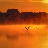 Утро на озере :: Олег Каплун