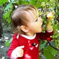 в саду у дедушки :: Леонид Натапов