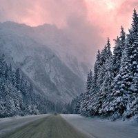 Лесная дорога в горах :: Alex