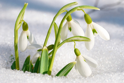 Моя весна