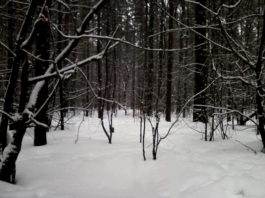Снежный лес - Кристина Кеннетт