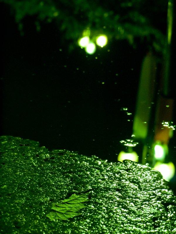 Плесень в фонтане) - Kate Bond