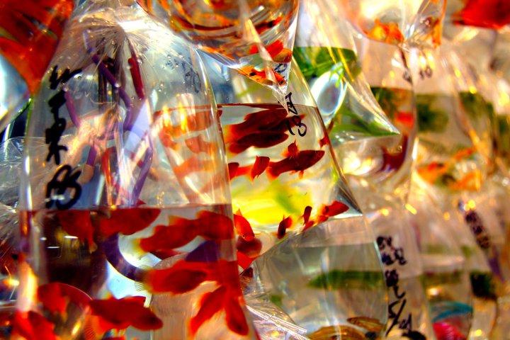 Fish market. Hong Kong. - Eva Langue