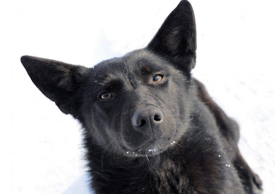 Пёс улыбается - Николай Шлыков