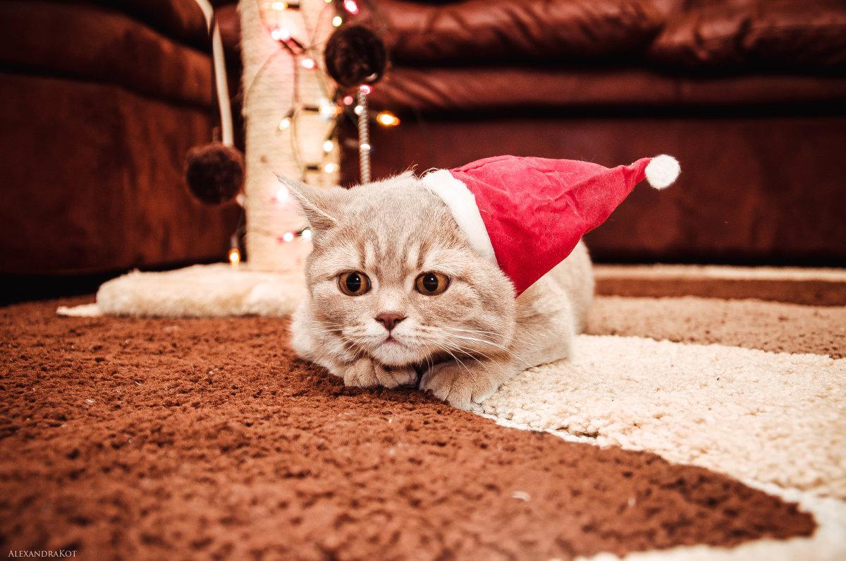 Новогоднее настроение*! - Alexandra Kot
