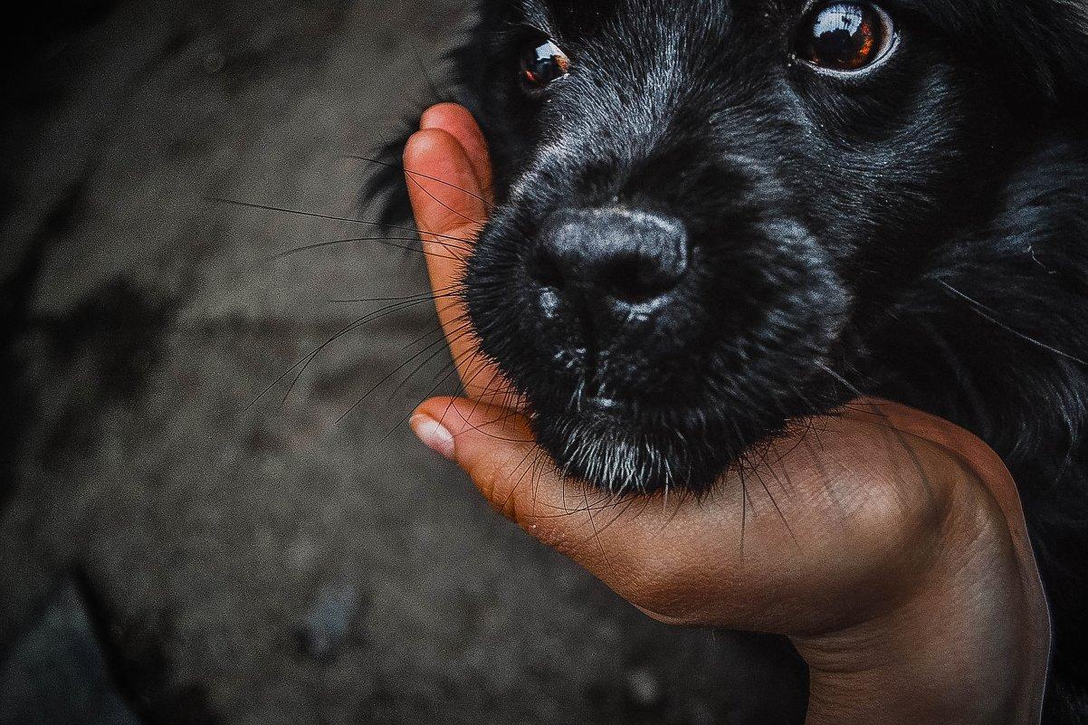 глаза собаки - Анна Рэйн