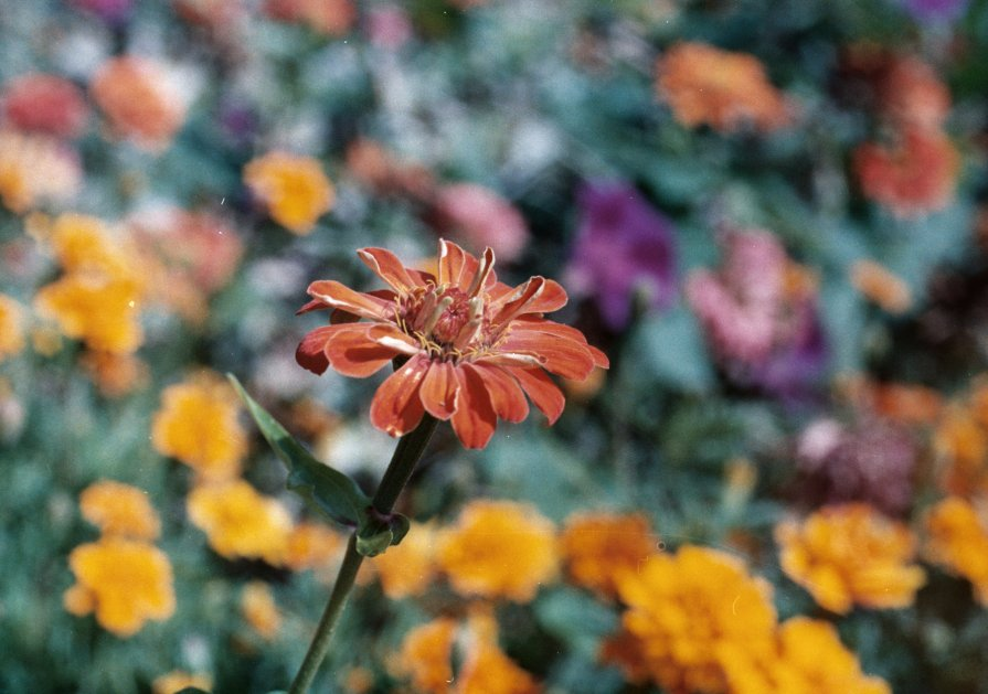 Flowers - Anastasia GangLiON