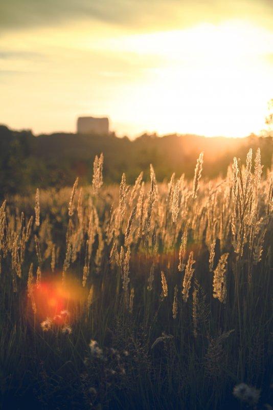 Золото солнца - Артём Толокнов