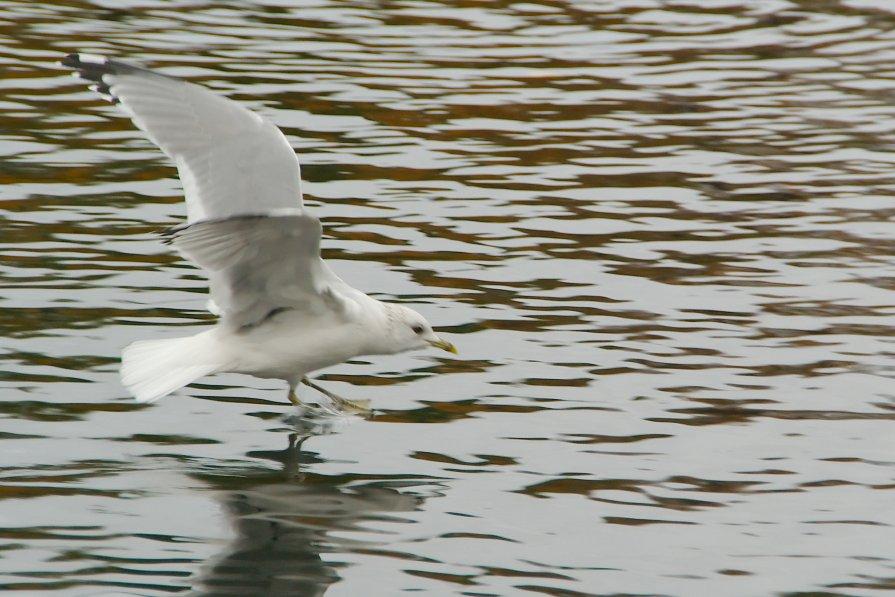 чайка - Алексей Кудрявцев