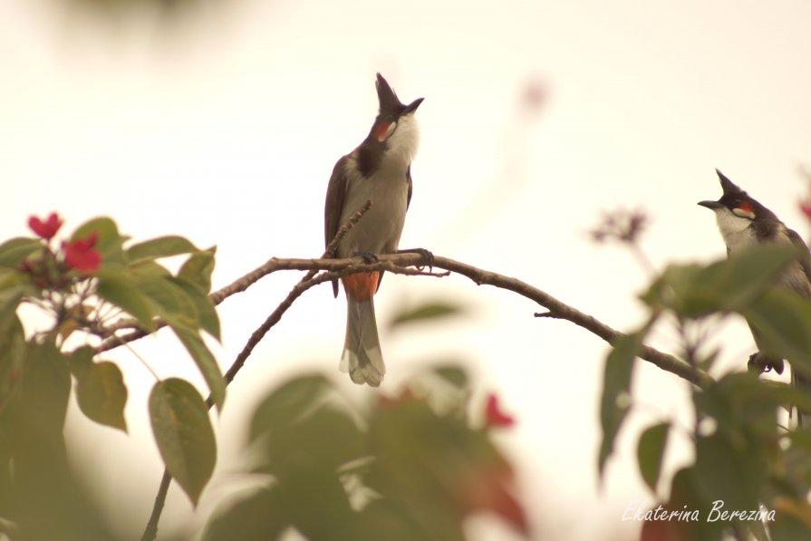 Экзотические птицы - Екатерина Березина