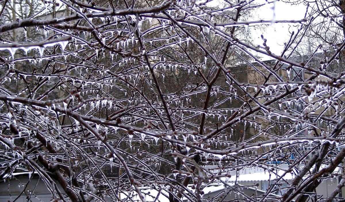 На 53 день зимы выпало одно ведро снегу и ледяной дождь - Александр Скамо