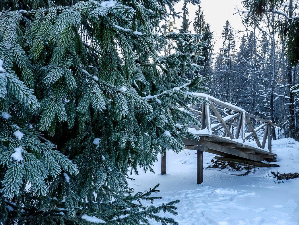 Морозный январь - Наталья Rosenwasser