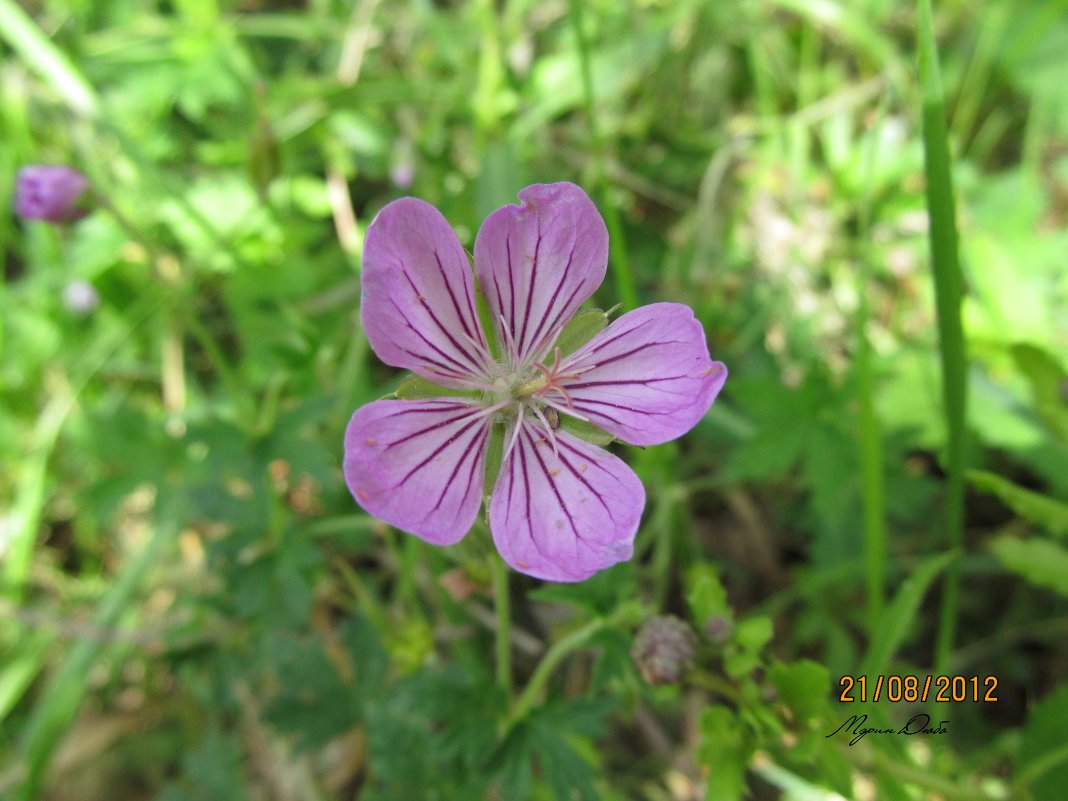 Нежный цветок - Мэрин Дюбо