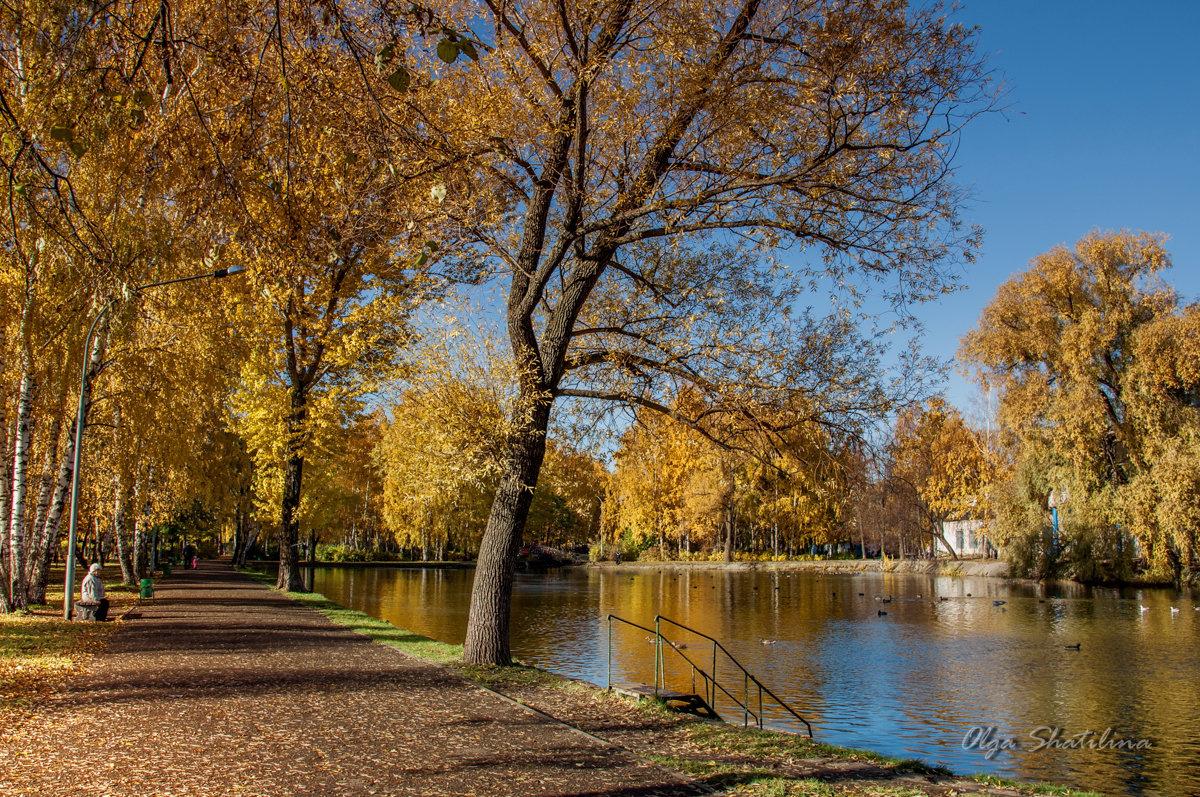 Осеннее утро в парке - Olga Shatilina