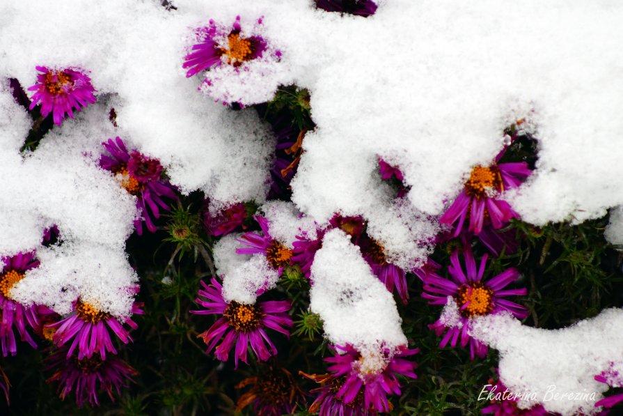 Октябрина под снегом в октябре - Екатерина Березина