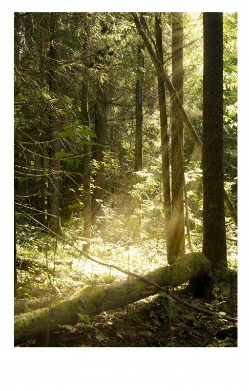 Утро в лесу - Наталья Мунцева