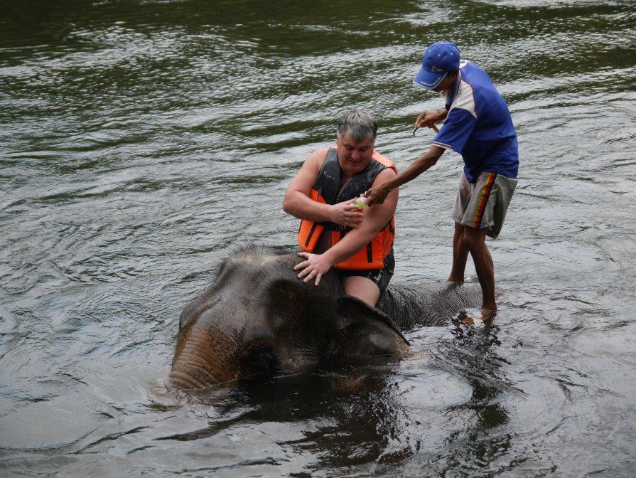 решили мы помыться со слоном - валерий телепов