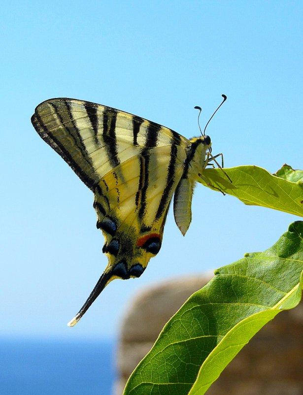 Бабочка - Виталий Острецов