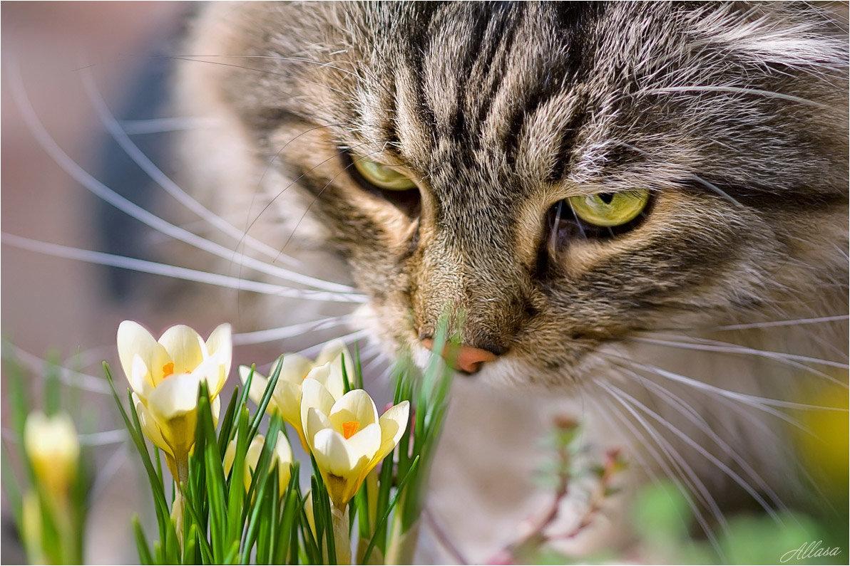 Как угомонить кота весной