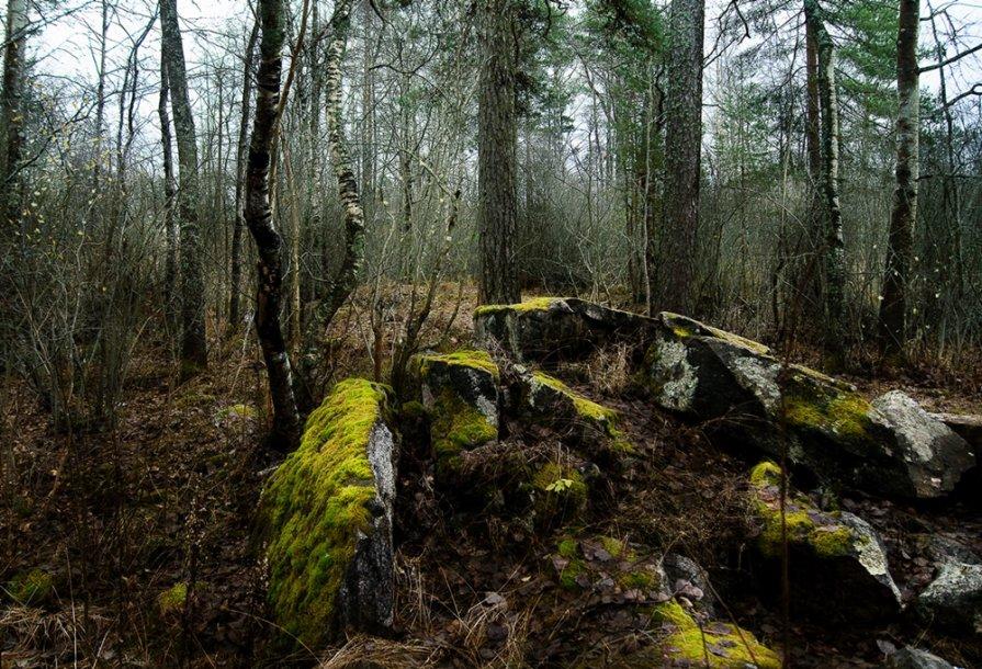 Лесной ноябрь - Екатерина Тумовская