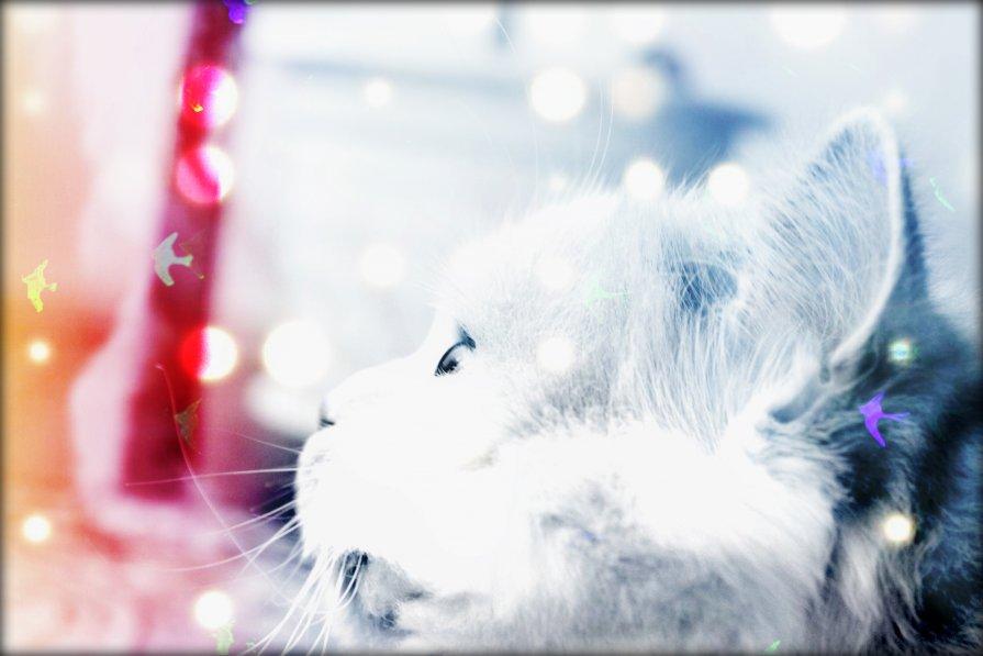 Skumpy is dreaming - natalia nataria
