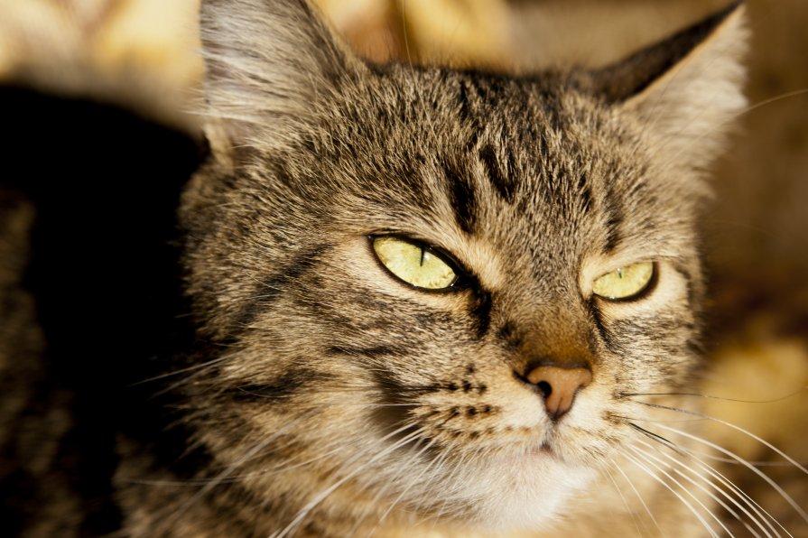 Кошка. просто кошка - Владимир Сорин