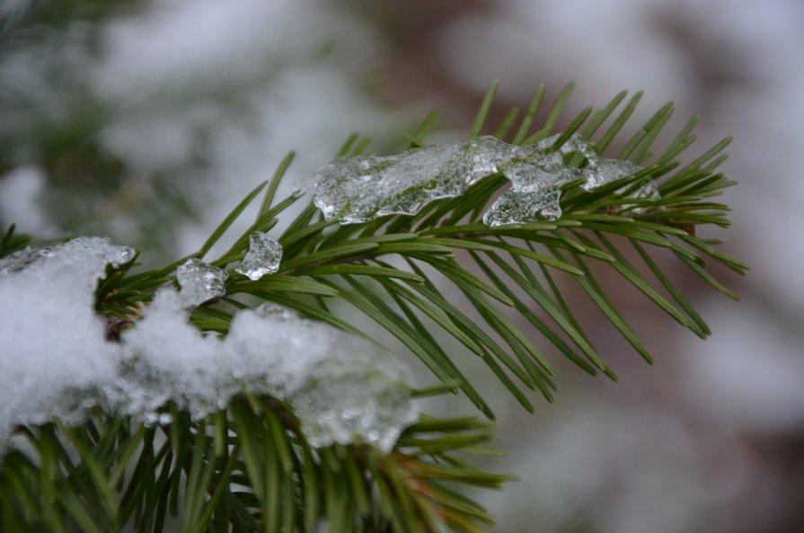 Первый снег - Анна Ермак