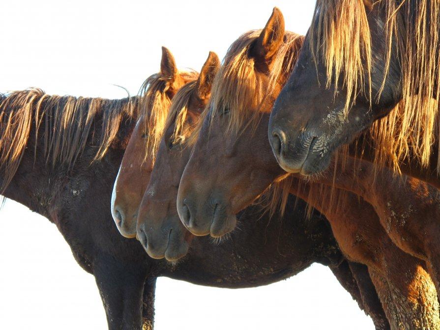 Одичавшие лошади Маныча - Ann _V_