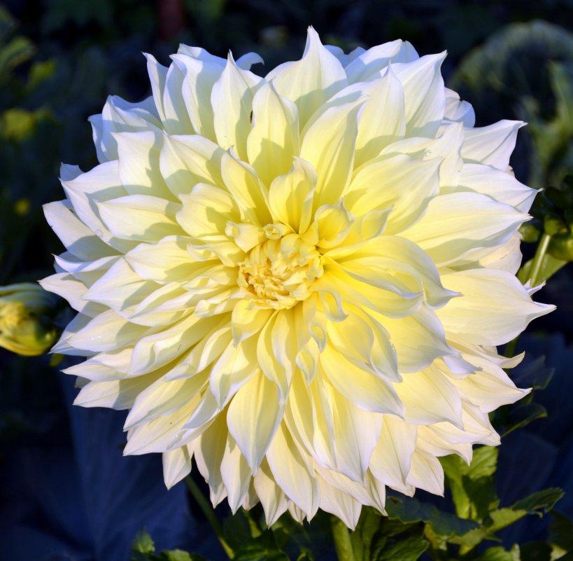 Цветы - Tatyana Semerik