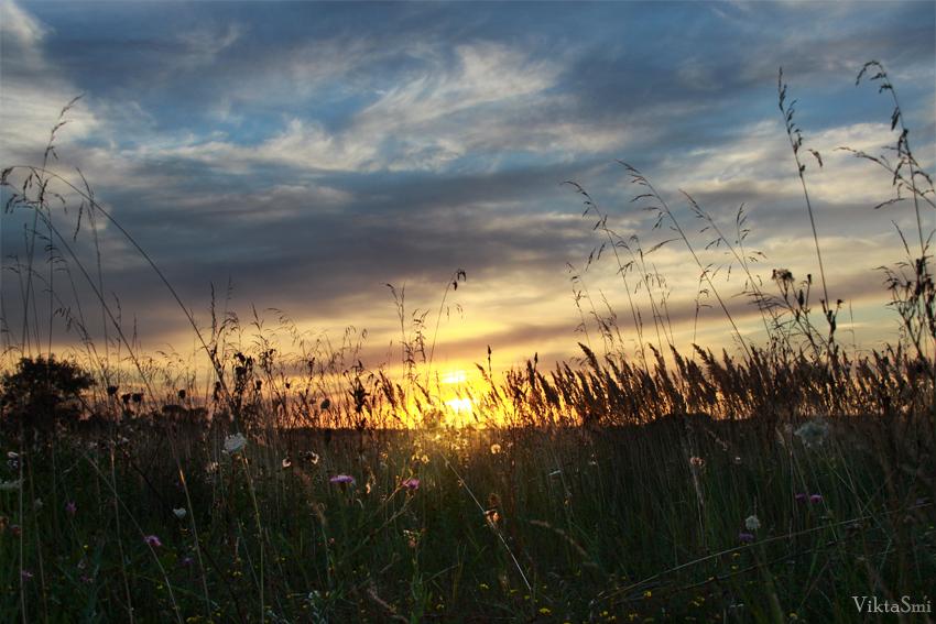 Сквозь луговые травы - Виктория Смирнова