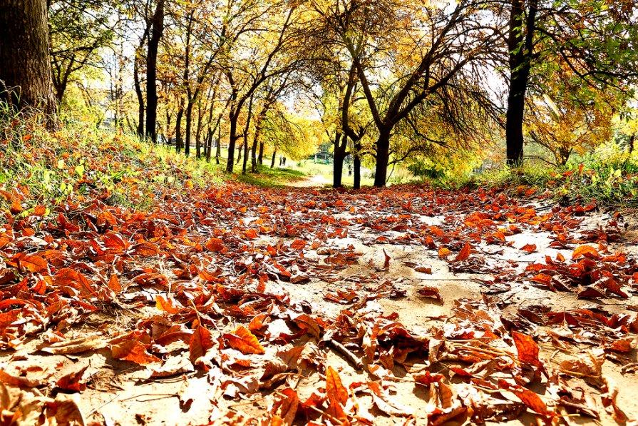 теплые листья октября - Елена Ворошина
