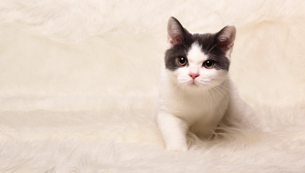котенок - Артем Ячменев