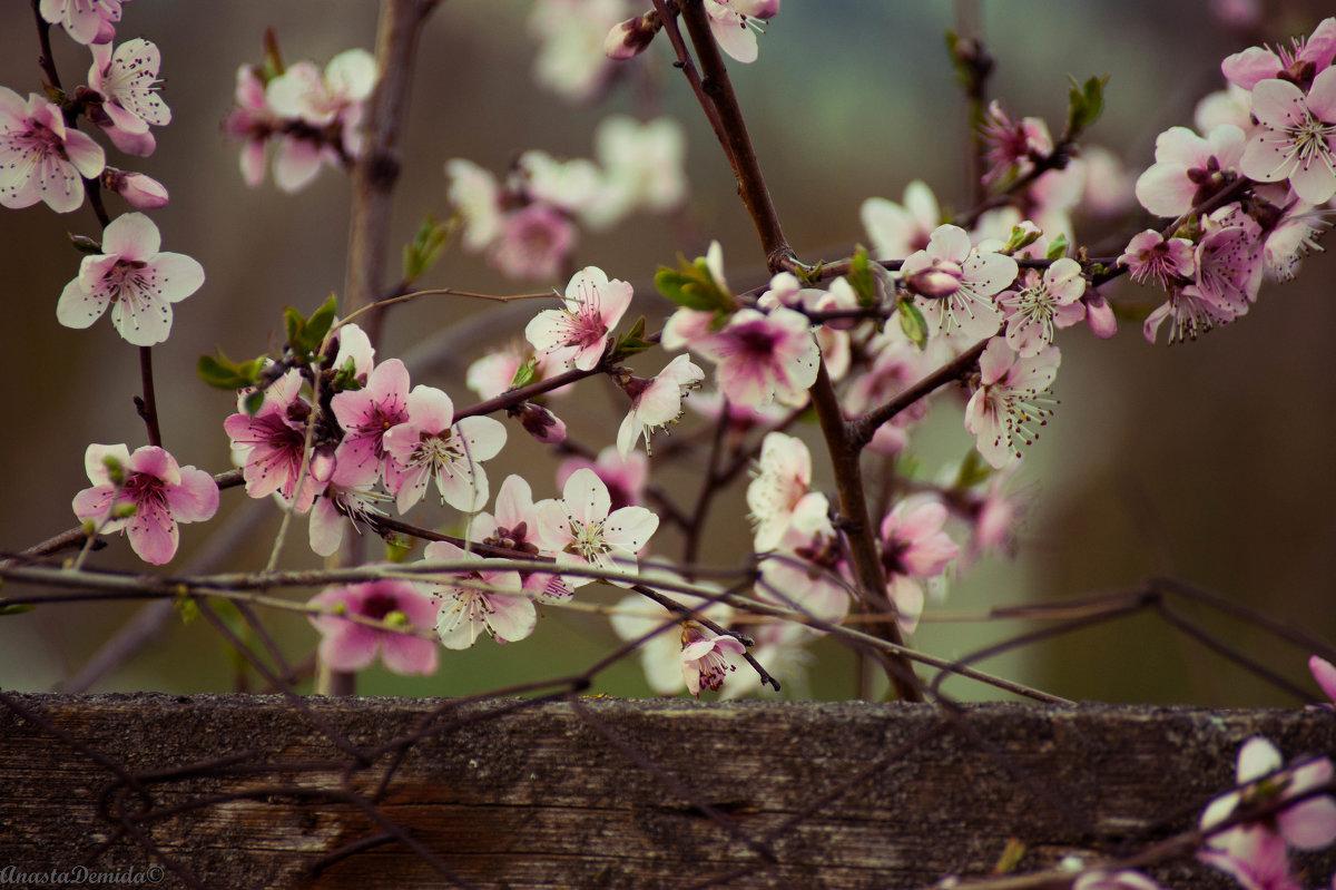 Цветочки - Анастасия Демида