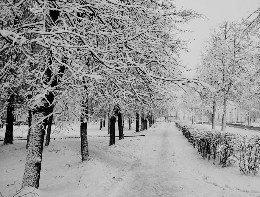 Город накрыло первым снегом - Кристина Кеннетт
