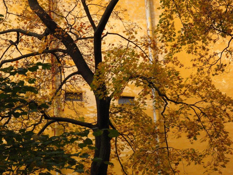 дерево-осень - Ната Иванова