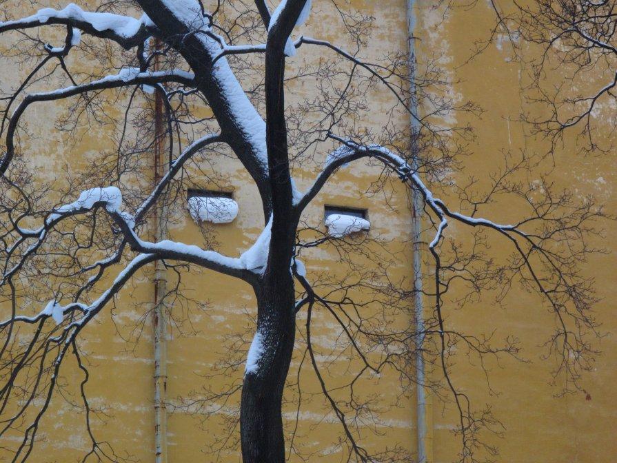 дерево-зима - Ната Иванова