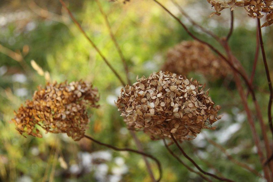 Цветы осени - Oly Andreeva